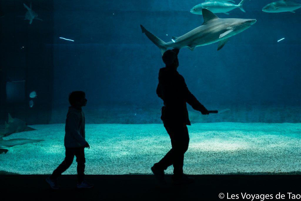 Aquarium de Gênes